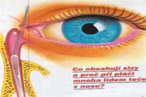 anatomia β έτος ιατρική οδοντιατρική μπρατισλάβα comenius