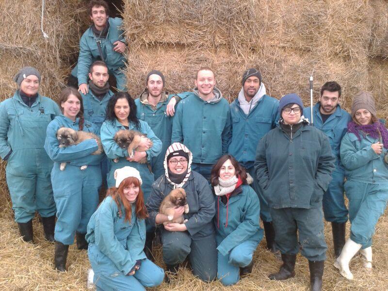 σπουδές κτηνιατρικής στο εξωτερικό, σπουδές στο εξωτερικό, kosice slovakia